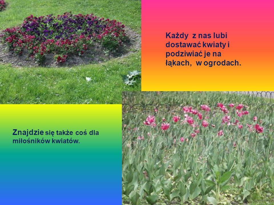Każdy z nas lubi dostawać kwiaty i podziwiać je na łąkach, w ogrodach.