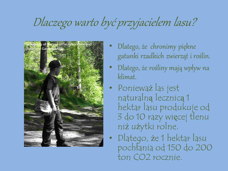 Dlaczego warto być przyjacielem lasu