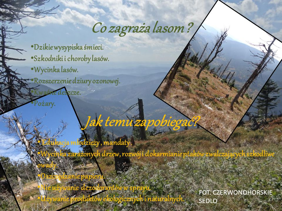 Co zagraża lasom Jak temu zapobiegać