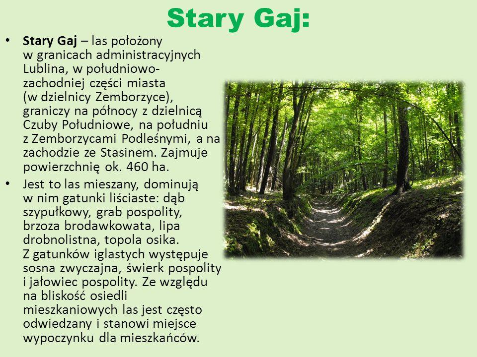 Stary Gaj: