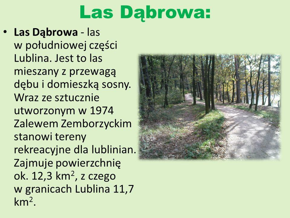 Las Dąbrowa:
