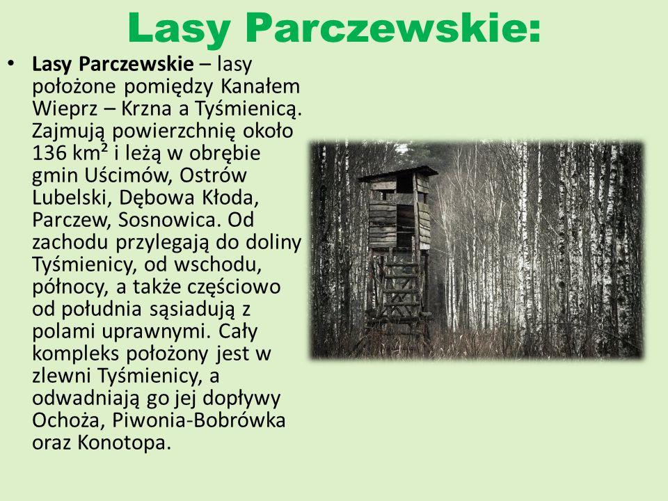 Lasy Parczewskie: