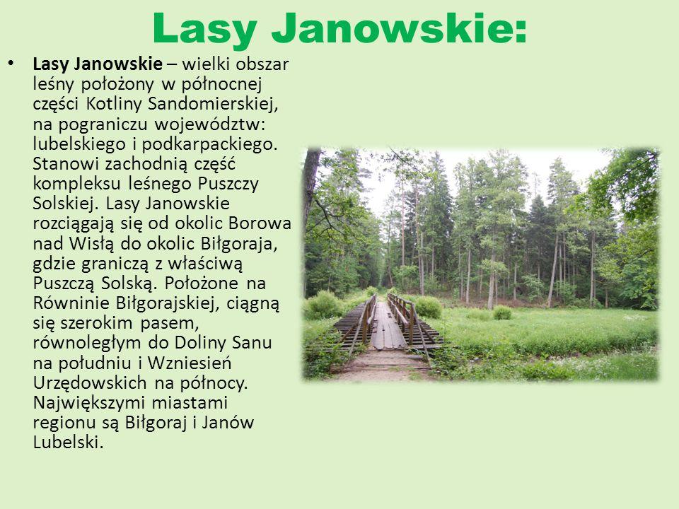 Lasy Janowskie: