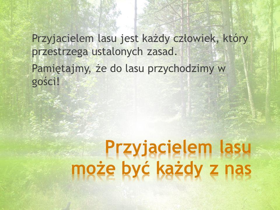 Przyjacielem lasu może być każdy z nas