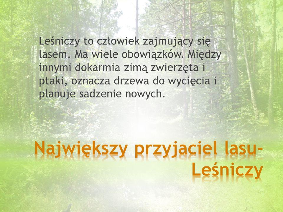Największy przyjaciel lasu- Leśniczy