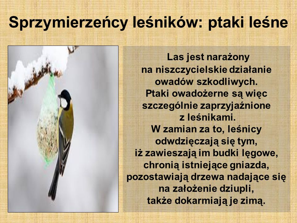Sprzymierzeńcy leśników: ptaki leśne