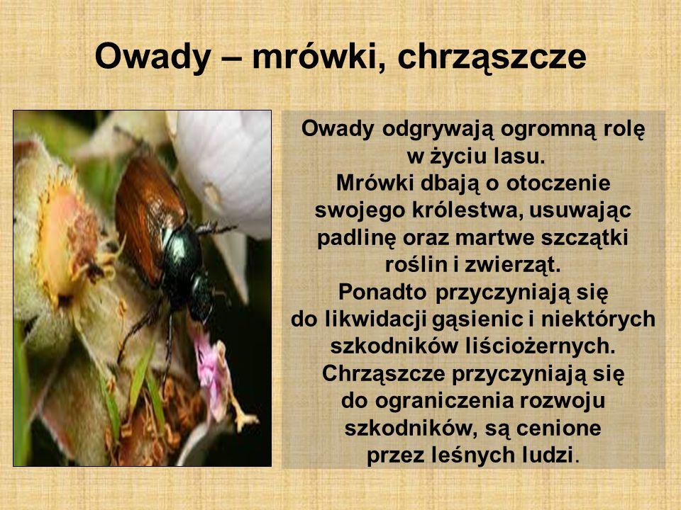 Owady – mrówki, chrząszcze