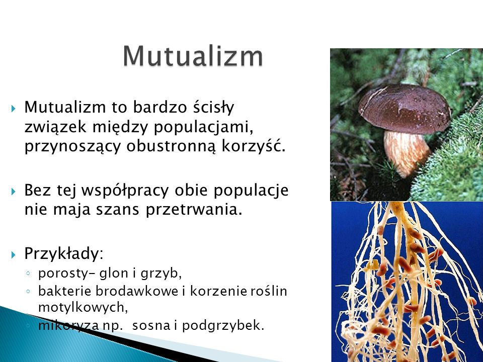 Mutualizm Mutualizm to bardzo ścisły związek między populacjami, przynoszący obustronną korzyść.