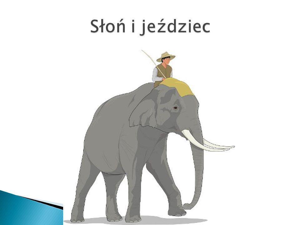 Słoń i jeździec
