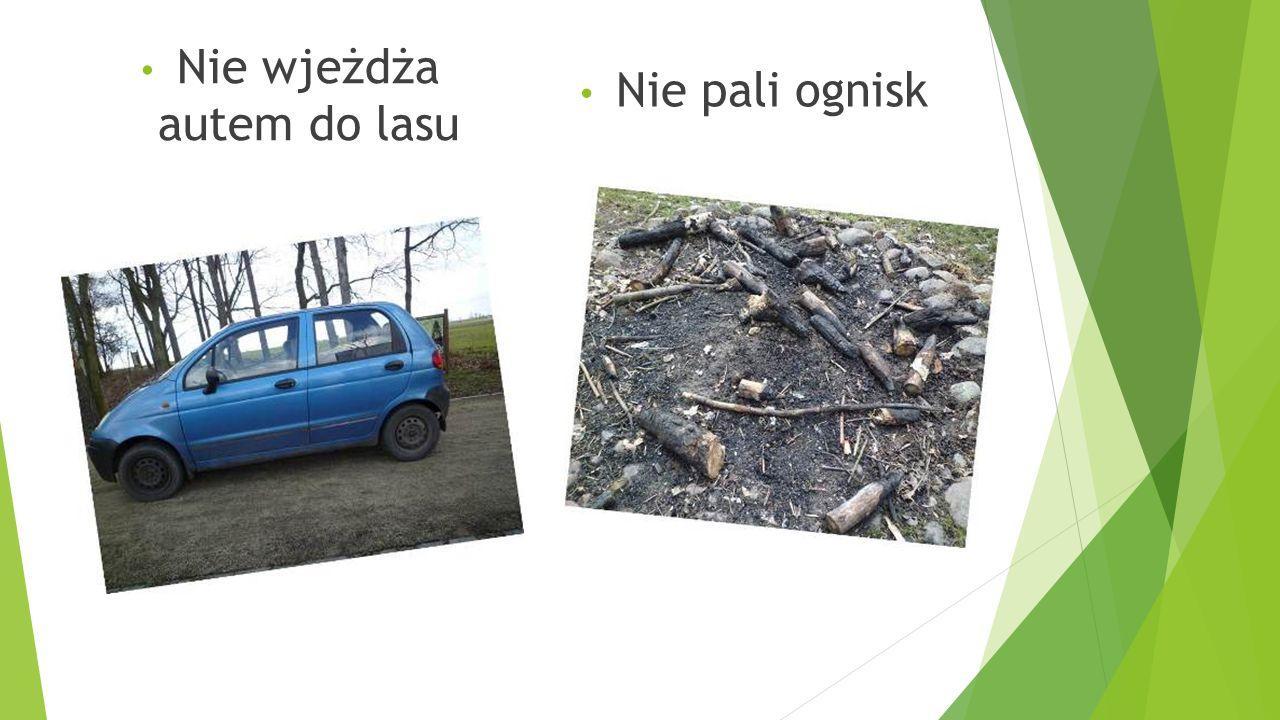 Nie wjeżdża autem do lasu