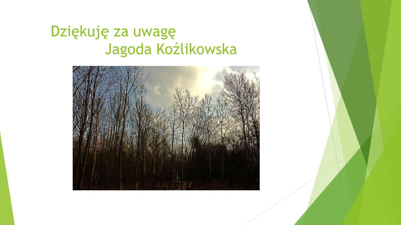 Dziękuję za uwagę Jagoda Koźlikowska