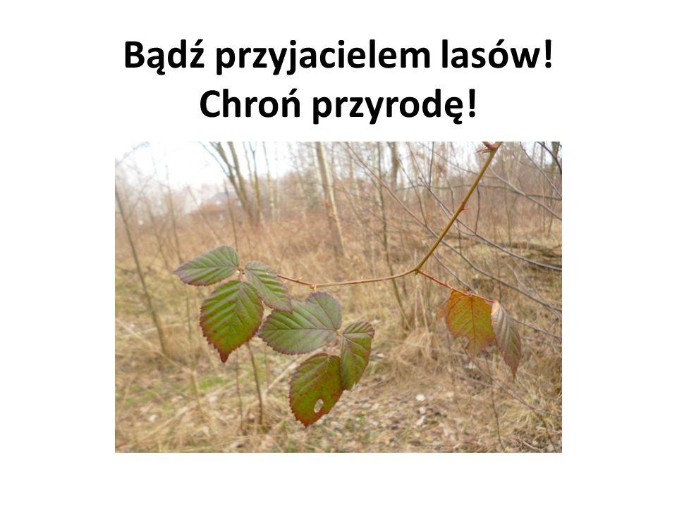 Bądź przyjacielem lasów! Chroń przyrodę!