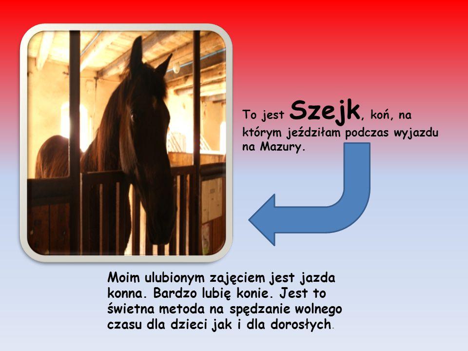 To jest Szejk, koń, na którym jeździłam podczas wyjazdu na Mazury.