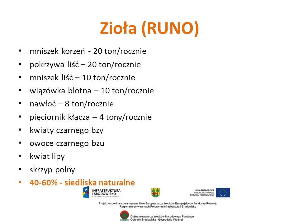 Zioła (RUNO) mniszek korzeń - 20 ton/rocznie