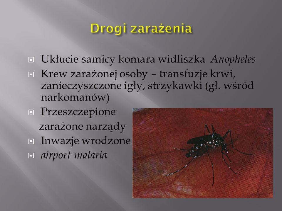 Drogi zarażenia Ukłucie samicy komara widliszka Anopheles