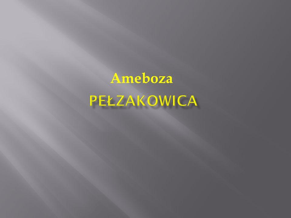 Pełzakowica Ameboza