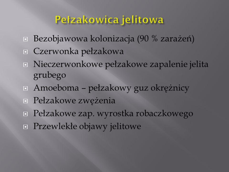 Pełzakowica jelitowa Bezobjawowa kolonizacja (90 % zarażeń)