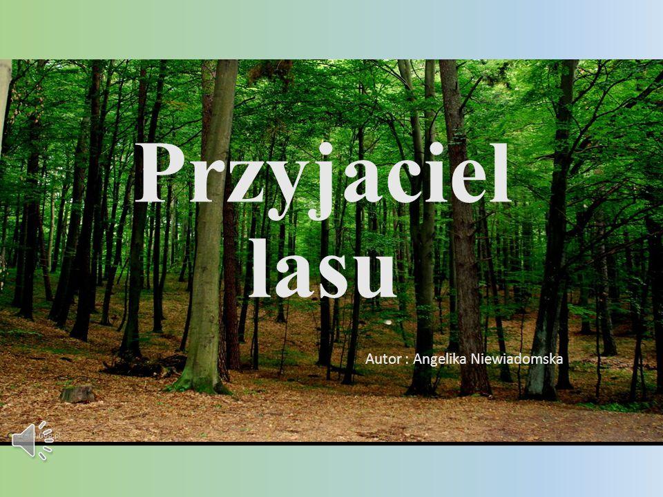 Autor : Angelika Niewiadomska