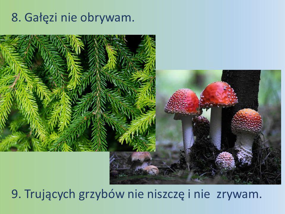 8. Gałęzi nie obrywam. 9. Trujących grzybów nie niszczę i nie zrywam.