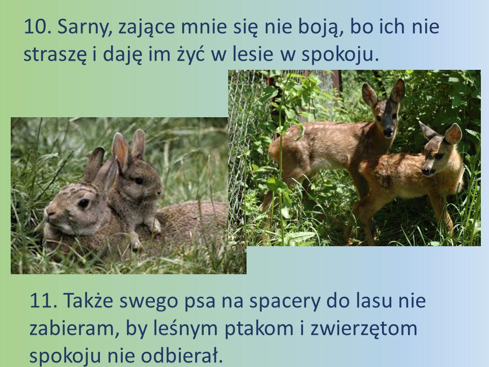 10. Sarny, zające mnie się nie boją, bo ich nie straszę i daję im żyć w lesie w spokoju.