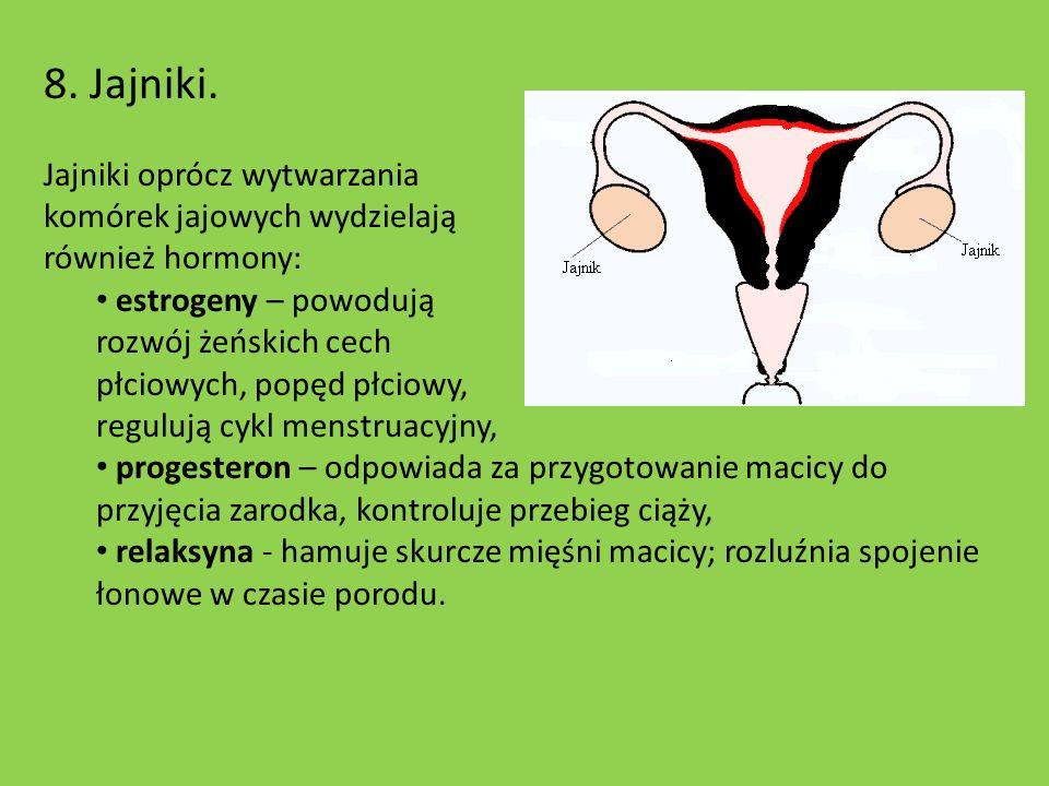 8. Jajniki. Jajniki oprócz wytwarzania komórek jajowych wydzielają