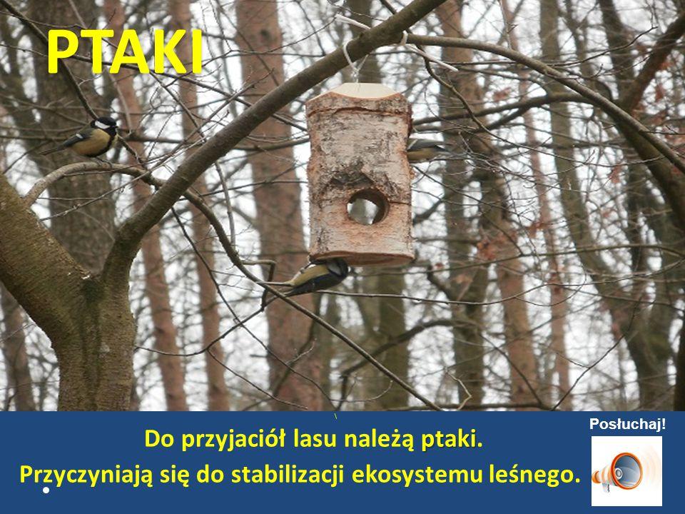 PTAKI Do przyjaciół lasu należą ptaki.