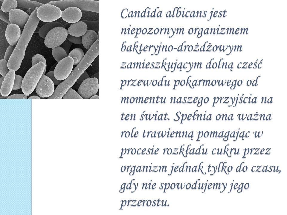 Candida albicans jest niepozornym organizmem bakteryjno-drożdżowym zamieszkującym dolną cześć przewodu pokarmowego od momentu naszego przyjścia na ten świat.