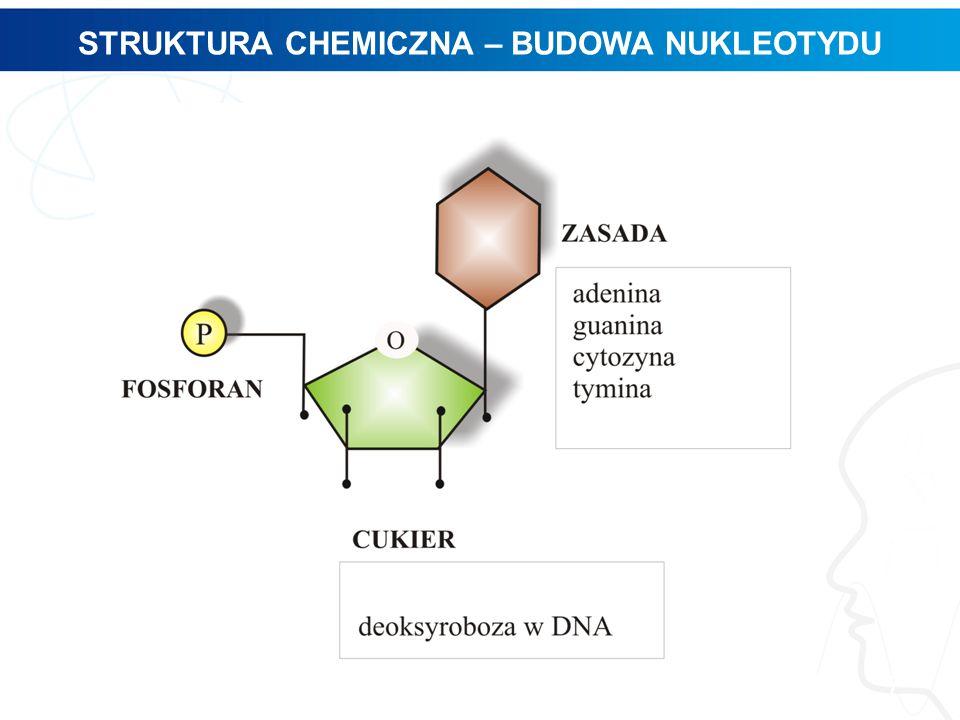 STRUKTURA CHEMICZNA – BUDOWA NUKLEOTYDU