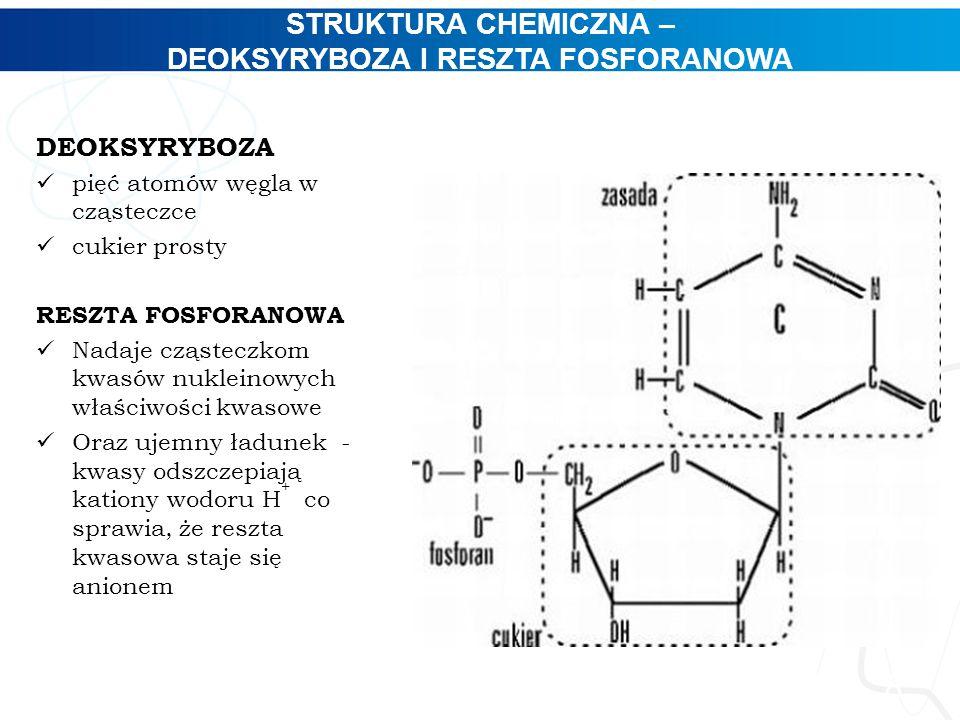 STRUKTURA CHEMICZNA – DEOKSYRYBOZA I RESZTA FOSFORANOWA