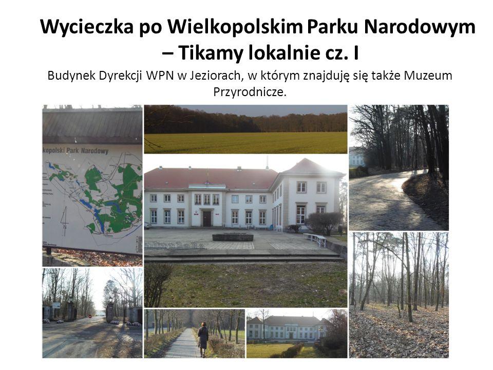 Wycieczka po Wielkopolskim Parku Narodowym – Tikamy lokalnie cz. I