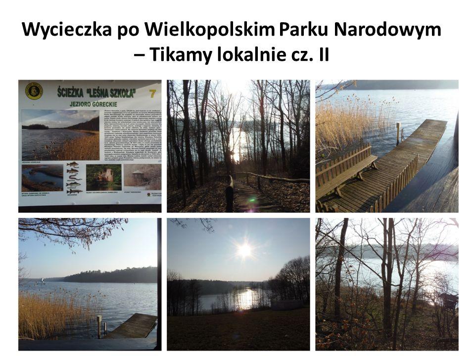 Wycieczka po Wielkopolskim Parku Narodowym – Tikamy lokalnie cz. II