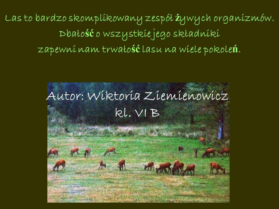 Autor: Wiktoria Ziemienowicz kl. VI B