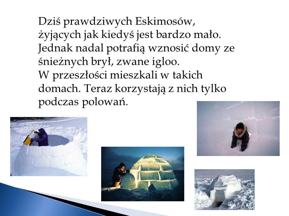 Dziś prawdziwych Eskimosów, żyjących jak kiedyś jest bardzo mało