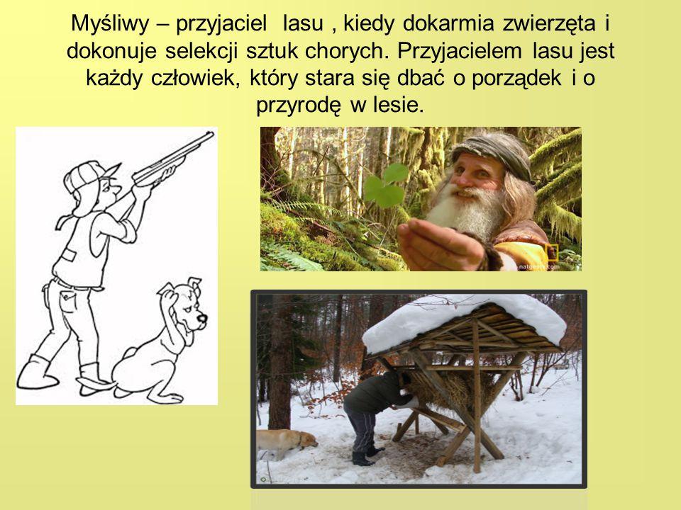 Myśliwy – przyjaciel lasu , kiedy dokarmia zwierzęta i dokonuje selekcji sztuk chorych.