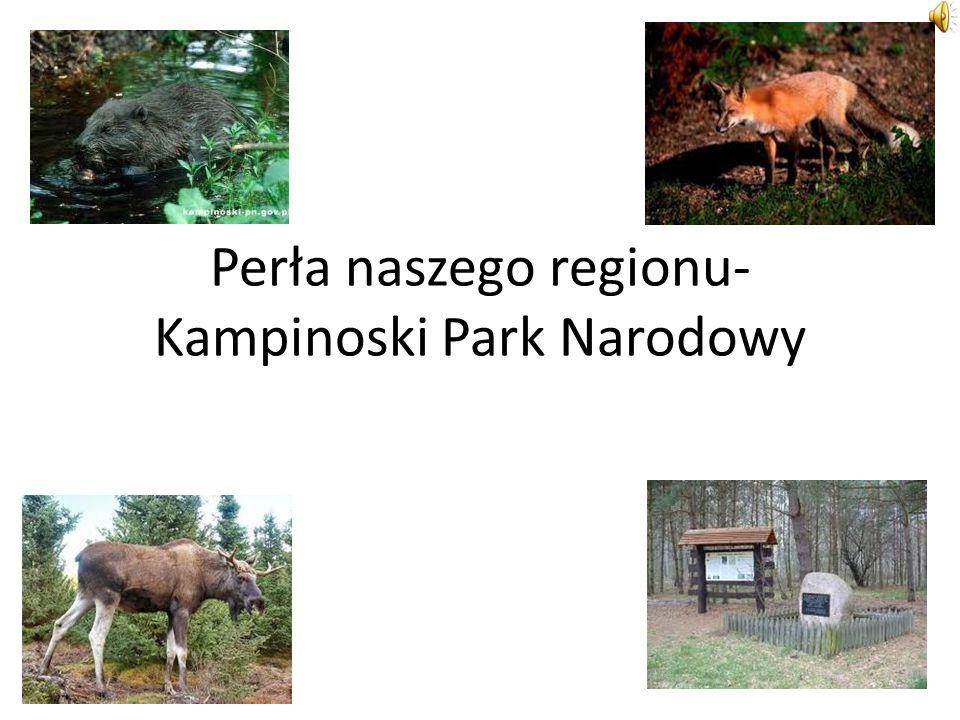Perła naszego regionu-Kampinoski Park Narodowy