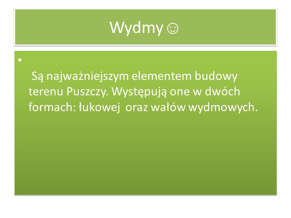 Wydmy☺ Są najważniejszym elementem budowy terenu Puszczy.