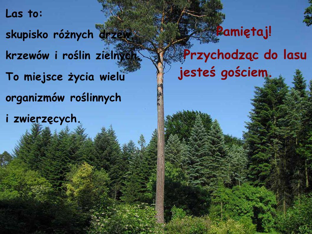 Przychodząc do lasu jesteś gościem.