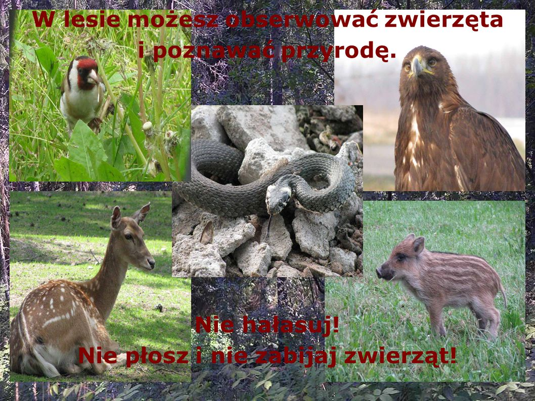 W lesie możesz obserwować zwierzęta i poznawać przyrodę.