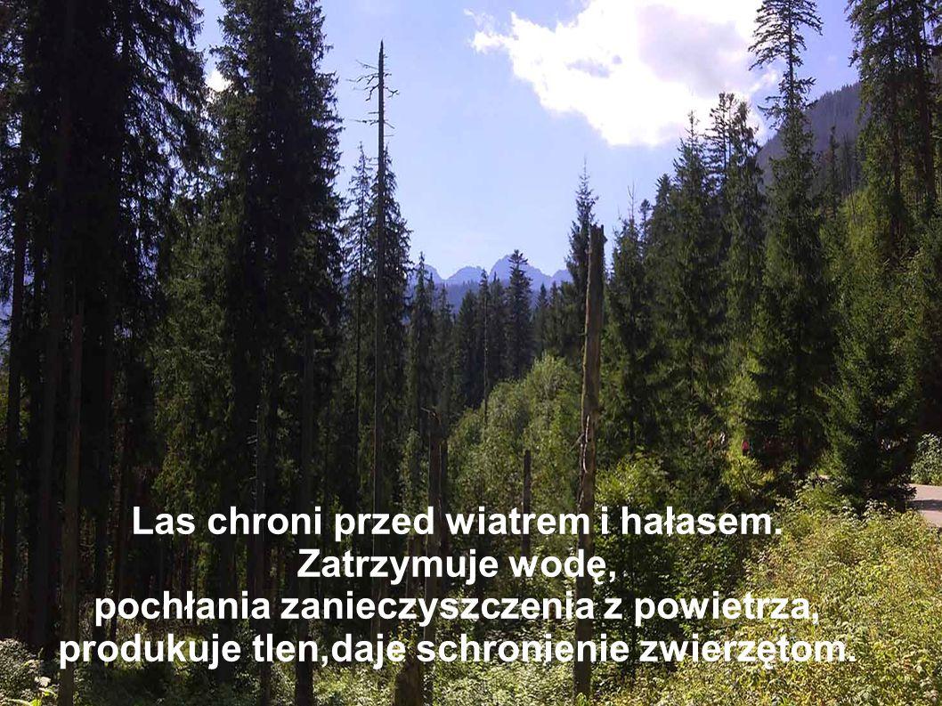 Las chroni przed wiatrem i hałasem. Zatrzymuje wodę,