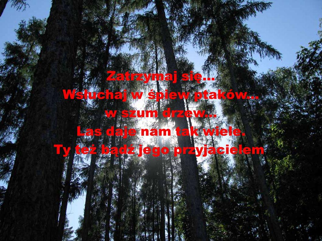 Wsłuchaj w śpiew ptaków... w szum drzew... Las daje nam tak wiele.