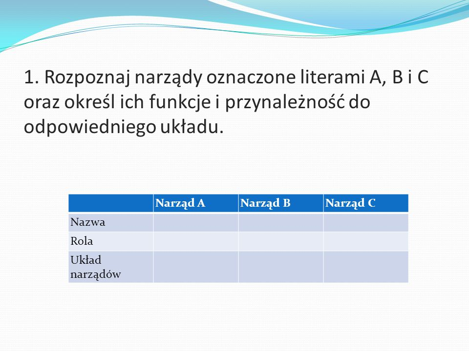 1. Rozpoznaj narządy oznaczone literami A, B i C oraz określ ich funkcje i przynależność do odpowiedniego układu.