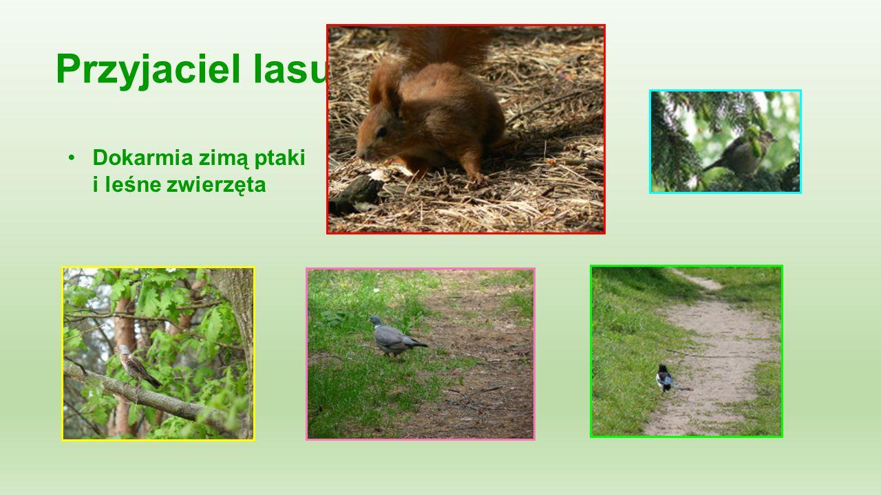 Przyjaciel lasu: Dokarmia zimą ptaki i leśne zwierzęta