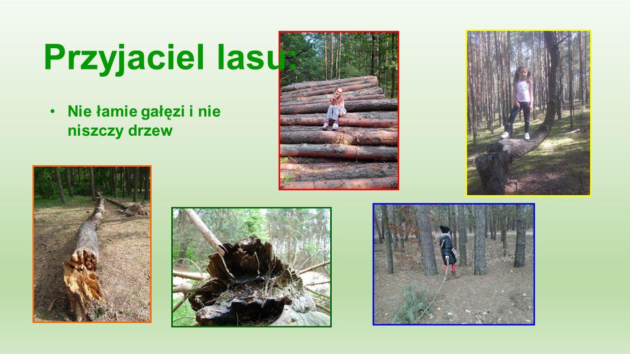 Przyjaciel lasu: Nie łamie gałęzi i nie niszczy drzew