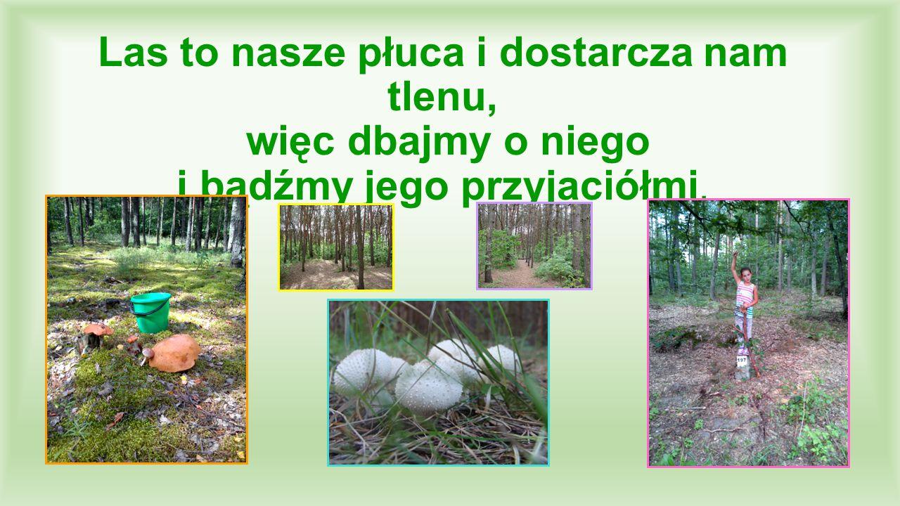 Las to nasze płuca i dostarcza nam tlenu, więc dbajmy o niego i bądźmy jego przyjaciółmi.