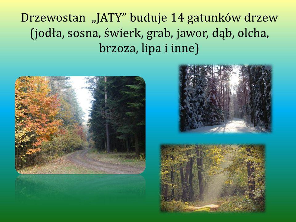 """Drzewostan """"JATY buduje 14 gatunków drzew (jodła, sosna, świerk, grab, jawor, dąb, olcha, brzoza, lipa i inne)"""