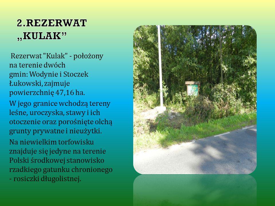 """2.REZERWAT """"KULAK Rezerwat Kulak - położony na terenie dwóch gmin: Wodynie i Stoczek Łukowski, zajmuje powierzchnię 47,16 ha."""
