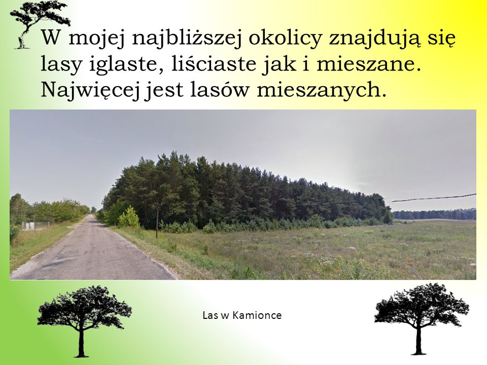 W mojej najbliższej okolicy znajdują się lasy iglaste, liściaste jak i mieszane. Najwięcej jest lasów mieszanych.