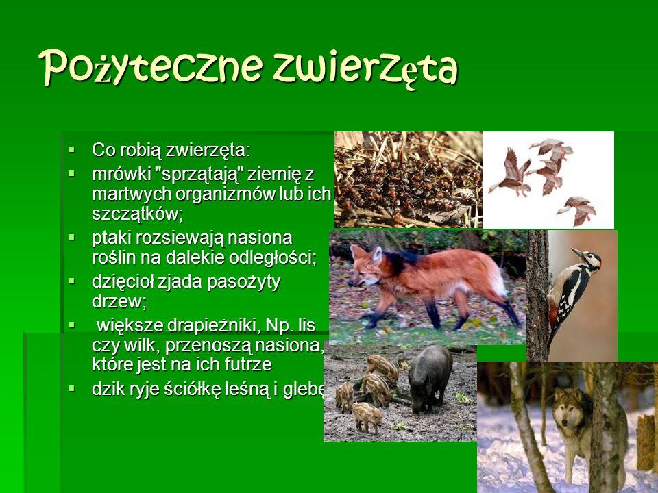 Pożyteczne zwierzęta Co robią zwierzęta: