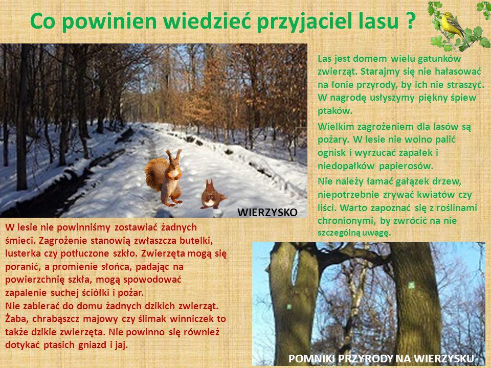 Co powinien wiedzieć przyjaciel lasu