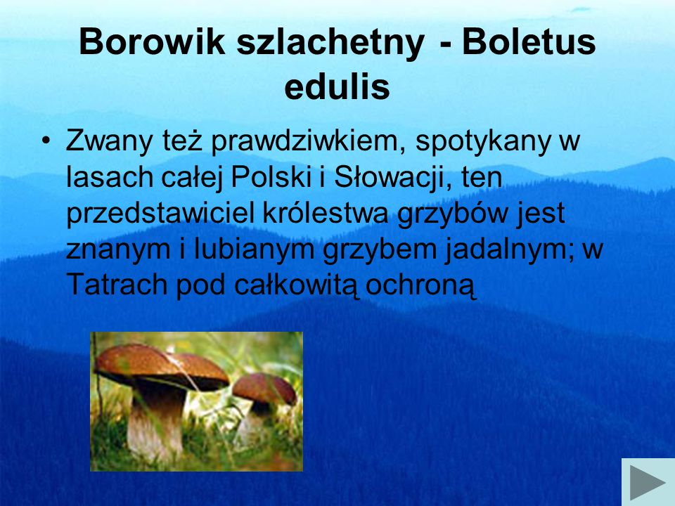Borowik szlachetny - Boletus edulis
